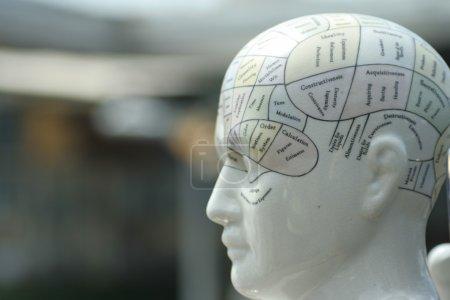 Phrenological head sculpture